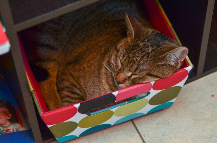 Cat sleeping in box