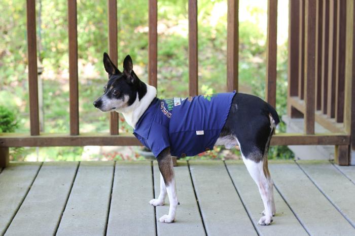 petsmart tommy bahama dog