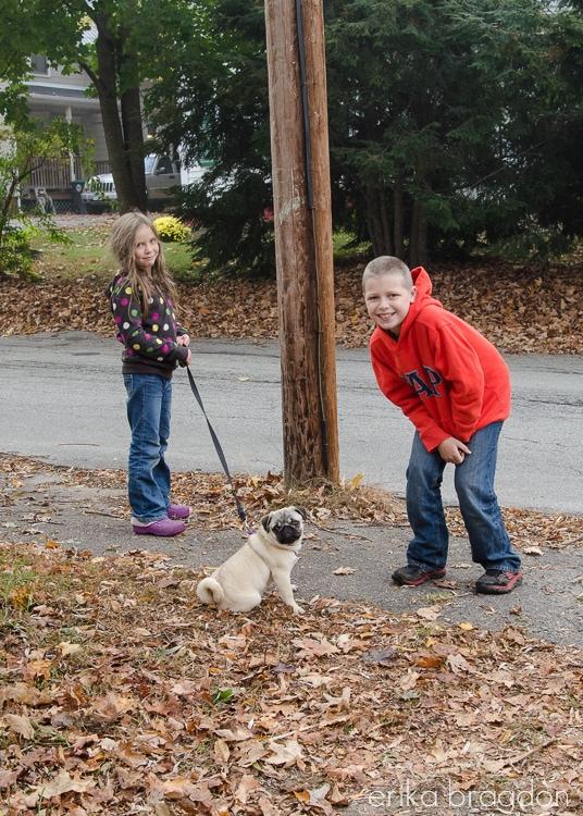 Zoey Pug Puppy-5