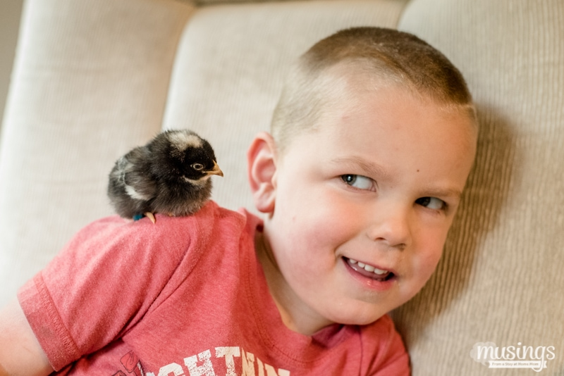 Raising Chickens - How to Tell Baby Chicks Apart