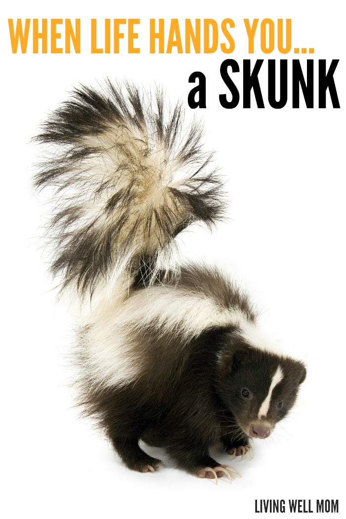 """When life hands you a skunk, what do you? Read our """"Skunk Story"""" - a true story so crazy you almost won't believe it!"""