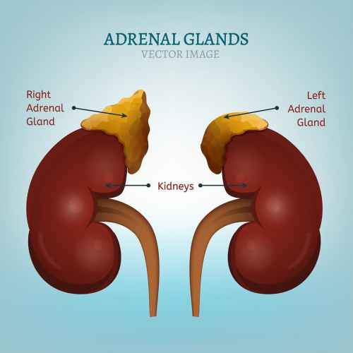 Adrenal fatigue is a common health issue many moms face these days. Here's what you should know about adrenal fatigue symptoms, plus how to get diagnosed and most of all, how to get your energy back!