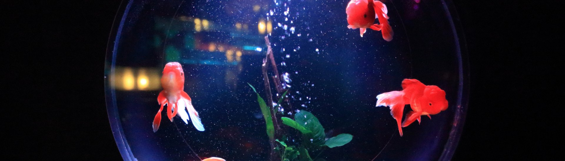 Attention! You're Better than a Goldfish (Busting the Attention Span Myth)