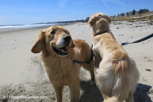 Dog Friendly Beaches - Maine