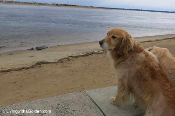 Salisbury Beach Dog Friendly