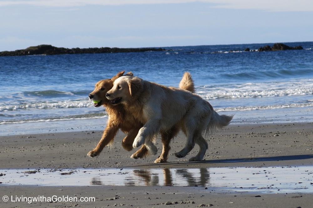 Dog Friendly Maine Beaches
