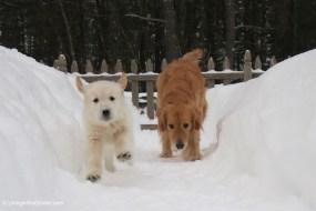 Snow Day Memories