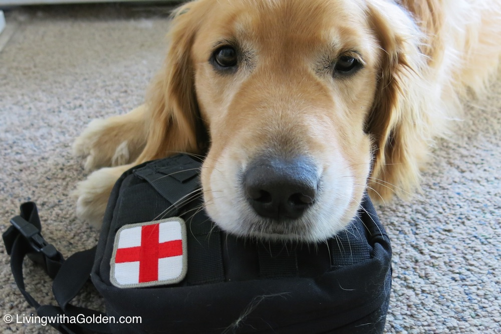 pet cpr and first aid class