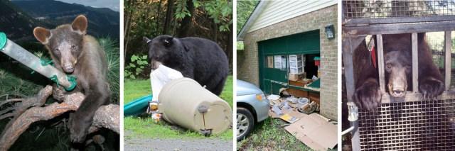 Bear Behavioral Ladder of Progression