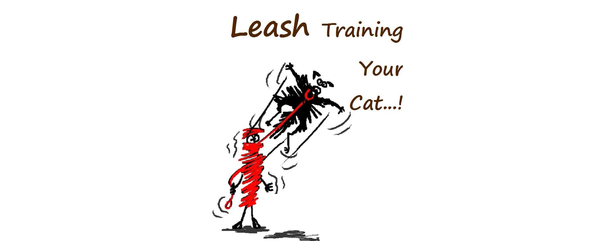 Leash Training Your Cat Living With Cats