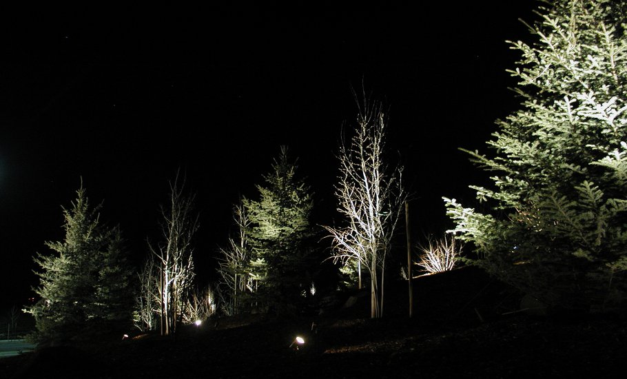 trees-alit-in-darkness