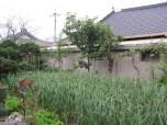 Minbak front garden