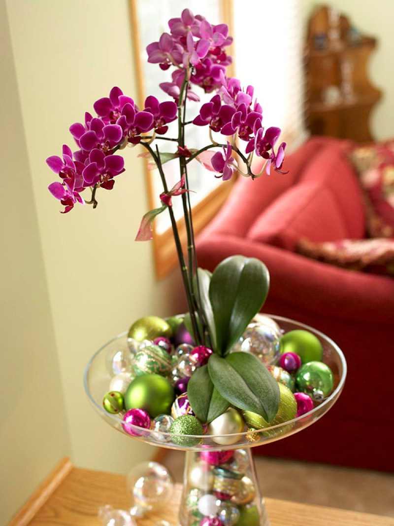 Decorating a houseplant for christmas.