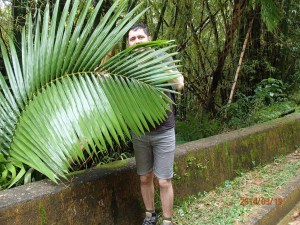 El Yunke big leaf