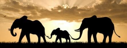elefanter på savannen