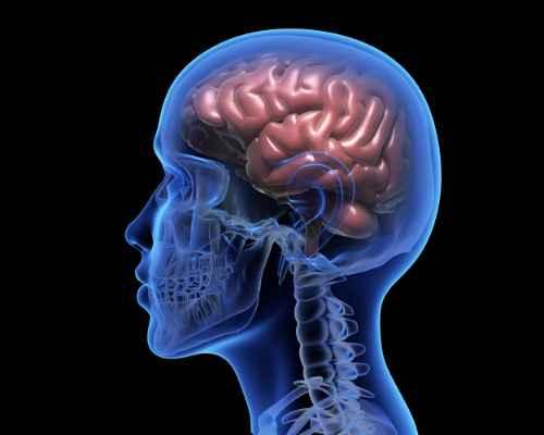 【年紀大,冇記性?】 蘇糖酸鎂-大腦的抗衰老補充劑
