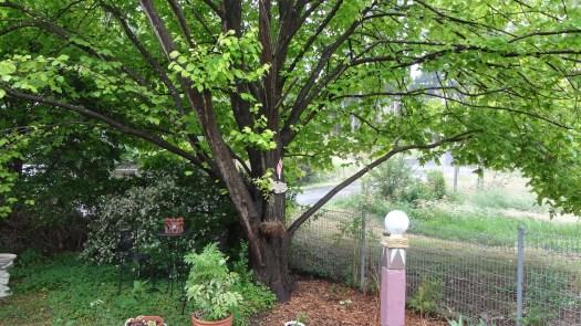 tree summer1