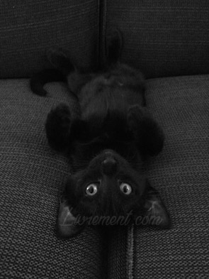 La chauve-souris Constantine le chat