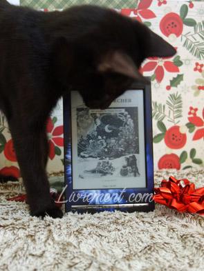 inspecteur des travaux Constantine le chat