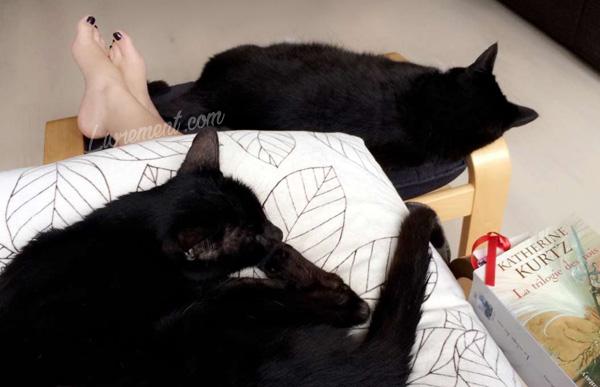 Lecture et chats