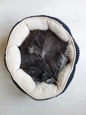 Chat en rond endormi dans un coussin
