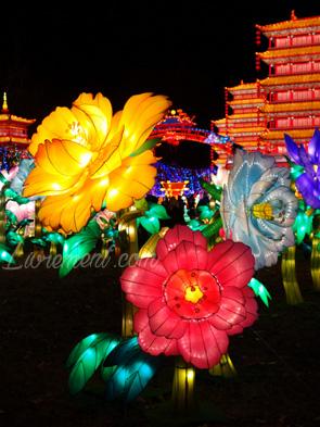 Fleurs du festival des lanternes à Gaillac