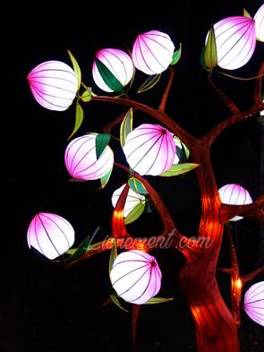 Pivoines du festival des lanternes à Gaillac