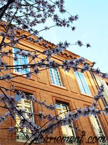 Bourgeons en fleurs à Toulouse