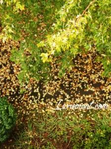 Tapis automnal fait de feuilles