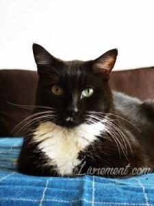 Le chat Raspoutine et grandes moustaches