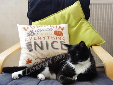 Chat allongé sur le fauteuil de lecture à coté d'un coussin à message sur l'automne