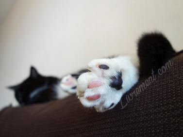 Gros plan sur les coussinets du chat Raspoutine