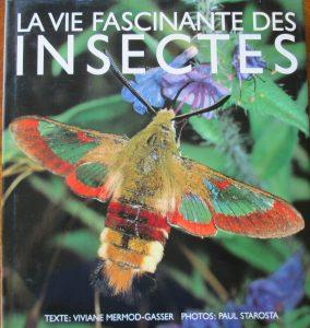 vie fascinante des insectes