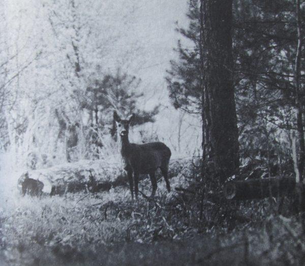 chasse de France