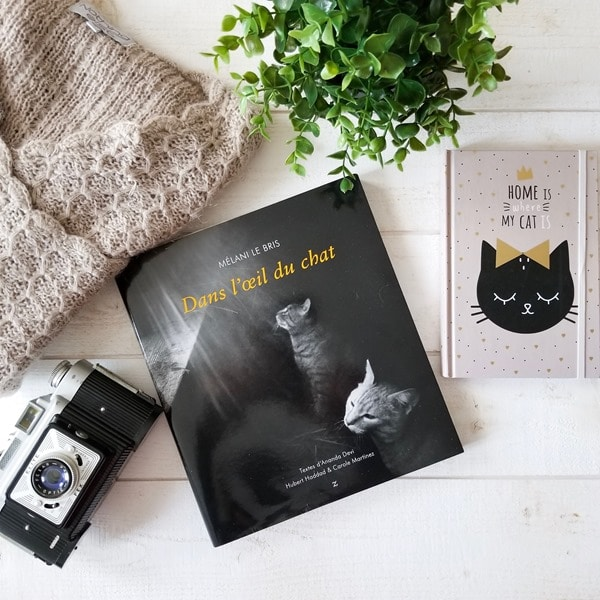 Dans l'oeil du chat - Mélani Le Bris livresalire (1)