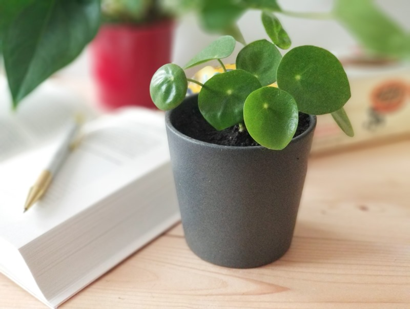 Blog green planter pilea