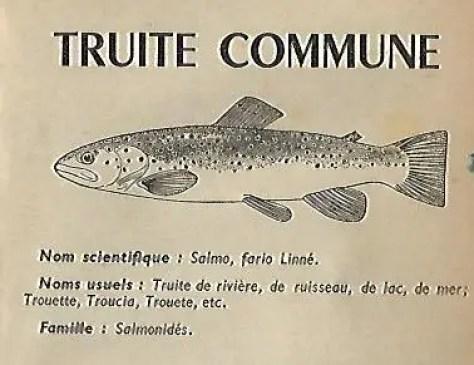Produire légumes et poissons avec la technique de l' aquaponie
