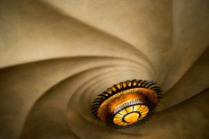 This one is a detail from a breakfast nook in a Gaudi-designed home in Barcelona