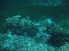 sea bed