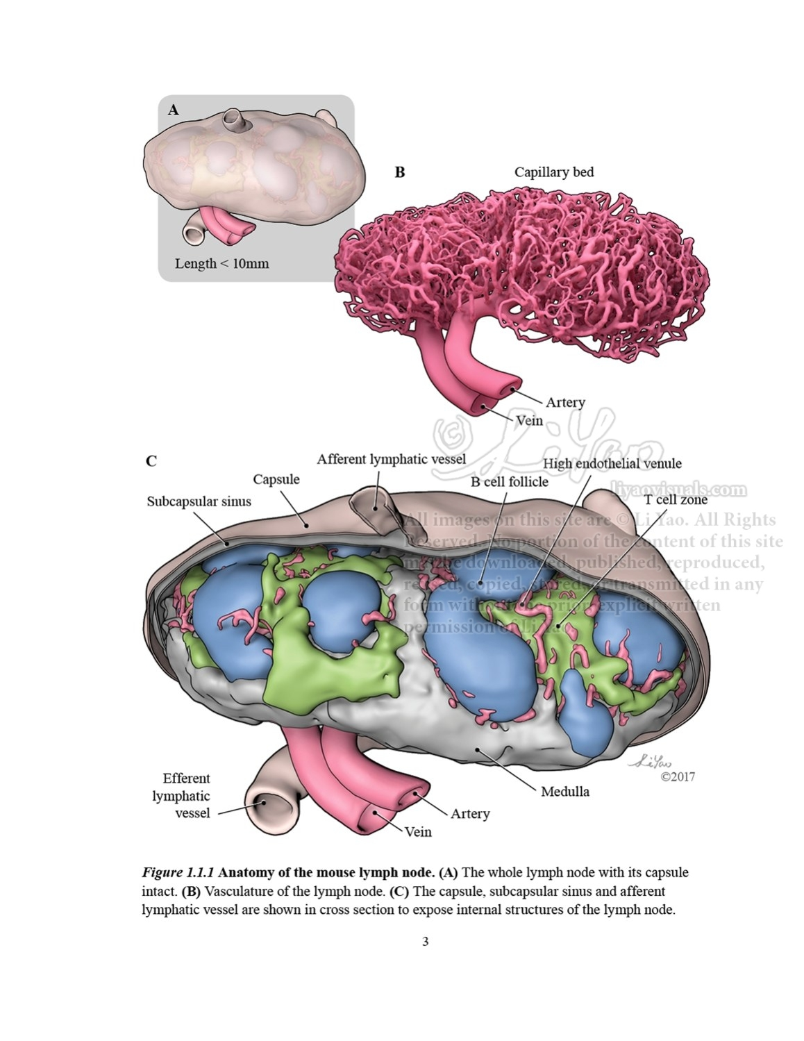 Li Yao – Visualizing Science & Medicine