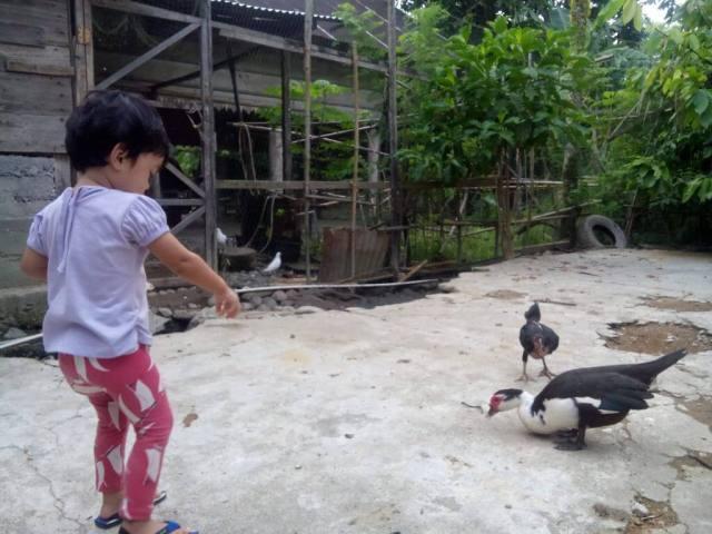 Naqiya sedang memberi umpan untuk bebek dan ayam