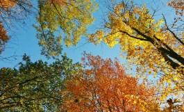 autumn-in-tospfield-2016-10