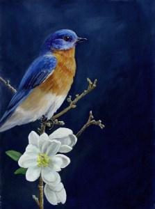 Bluebird ©liza myers