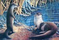 Thumbnail: Otters at the Water's Edge