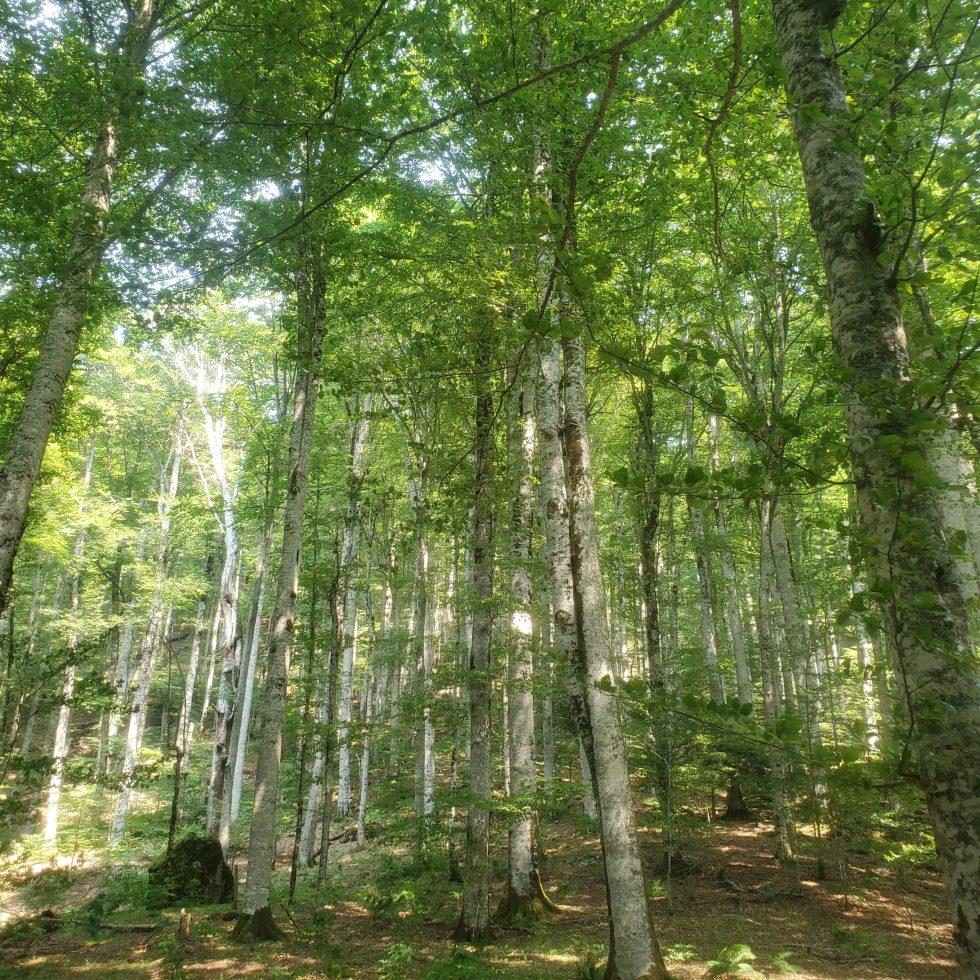 Старейший национальный парк Биоградска-Гора