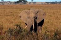Serengeti National Park, October 13, 2011.