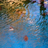 Pool 1061 November 4, 2018 - Digital image from the Pool series by Liz Claus.