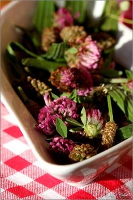 Lindenblüten, Rotklee, Spitzwegerich © Liz Collet
