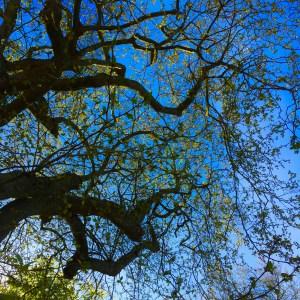 Rick's Trees