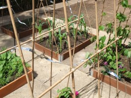 Garden Three: LizianEvents Ltd